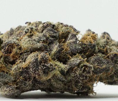 Purple Mimosa